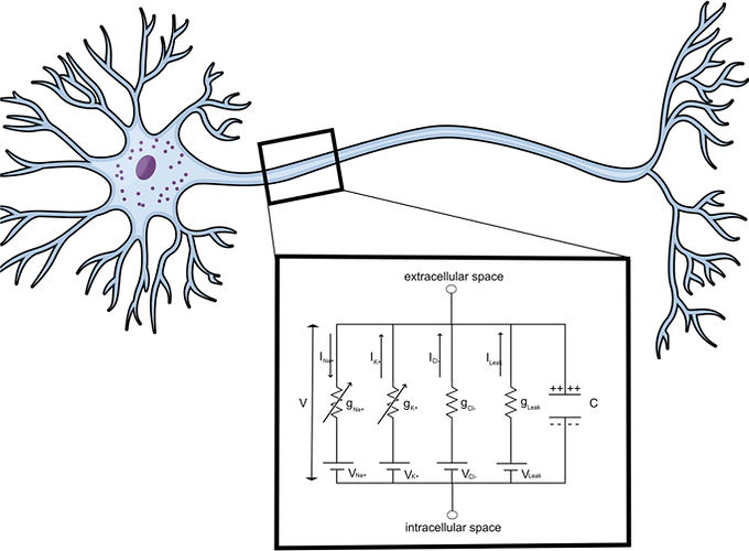 شبیه سازی نورون