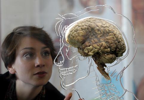 ظرفیت مغز انسان