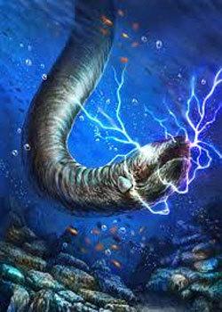 تولید برق توسط مارماهیهای الکتریکی