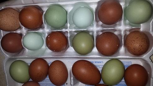 تخم مرغ های خانگی