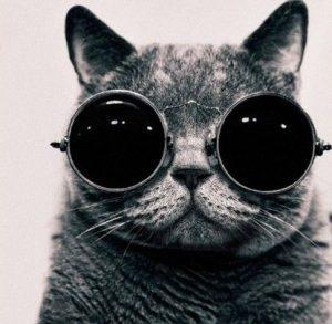 cool-cat-avatar-300x293