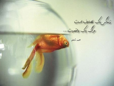 قشنگ ترین بیت فارسی